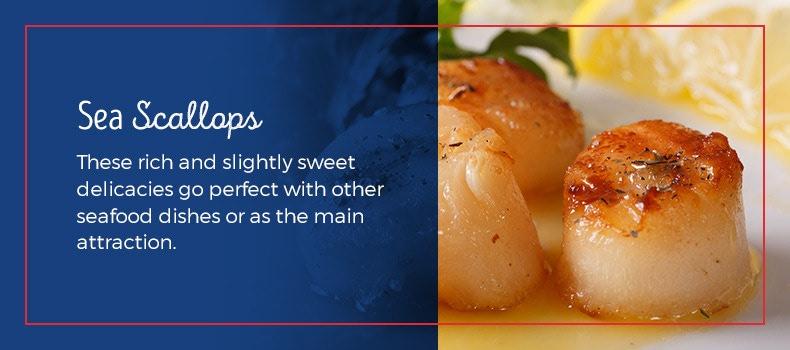 Sea scallop facts