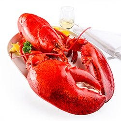 Buy giant lobster online