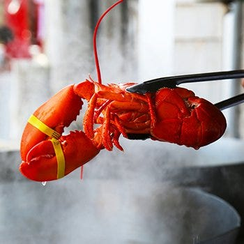 Live Lobster Steaming Instructions