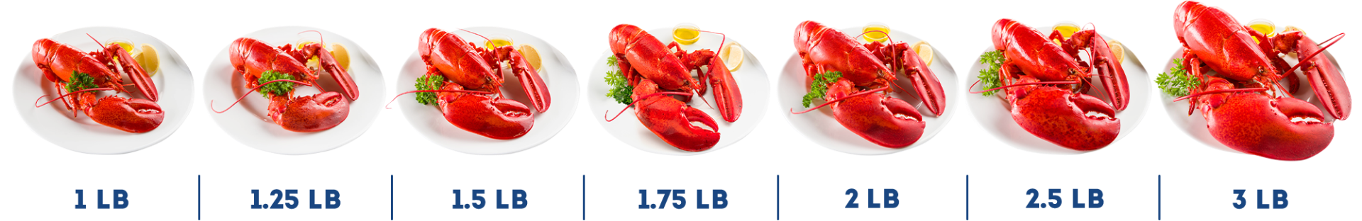 Lobster Comparison Chart
