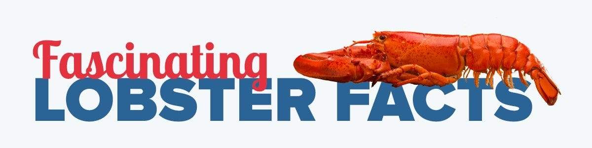maine lobster facts