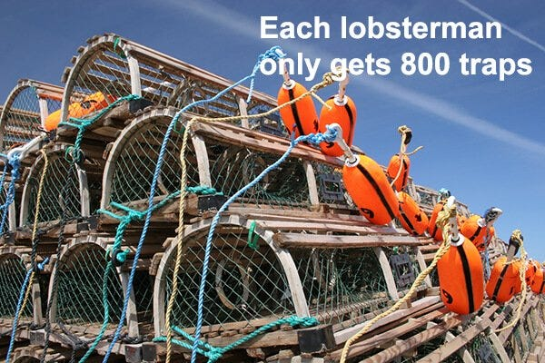 Lobster Trap Limit