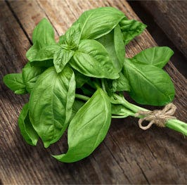 torn fresh basil leaves, plus more for serving