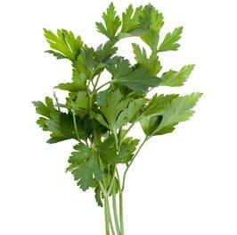 cilantro sprigs