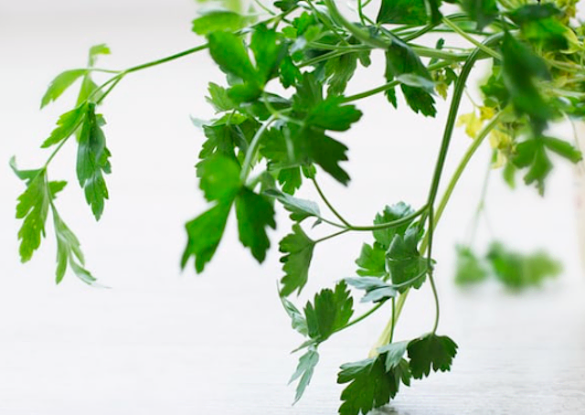 Fresh flat-leaf parsley leaves