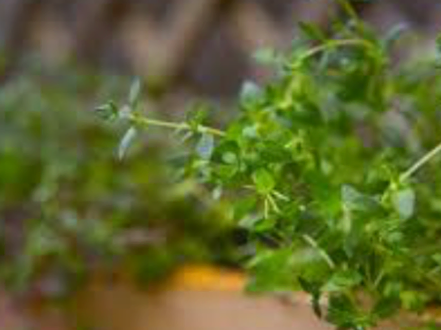 Fresh chopped thyme leaves