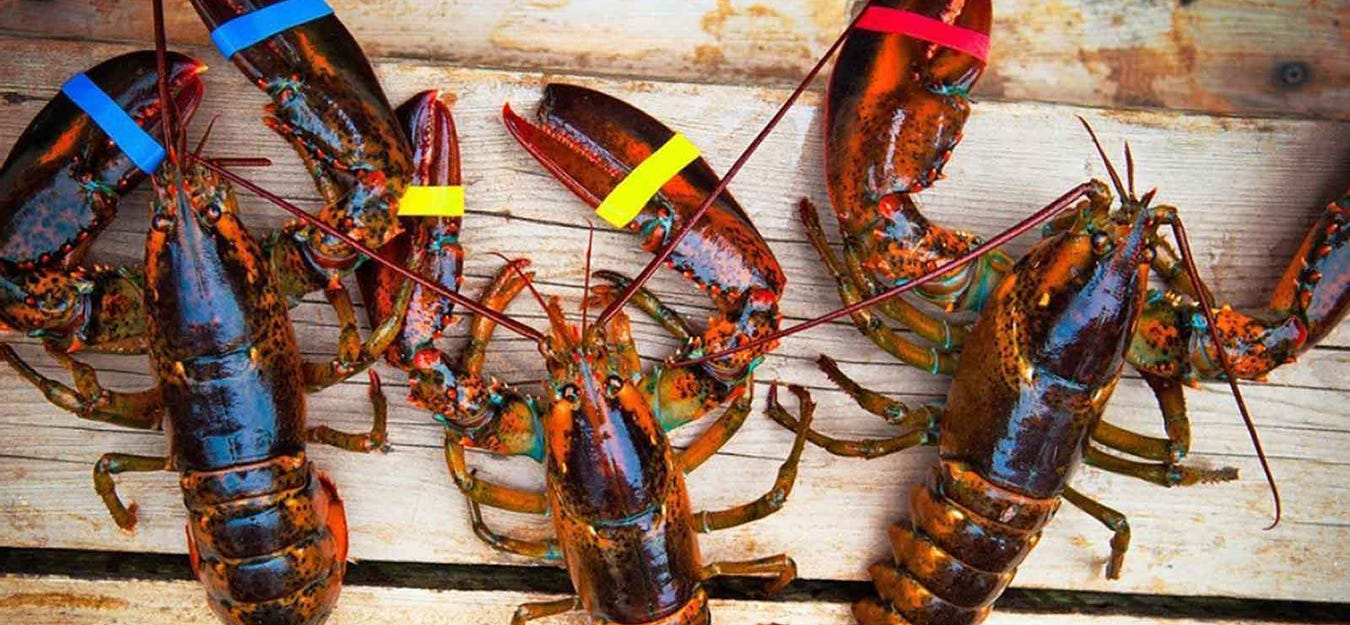 A Story Behind Every Lobster