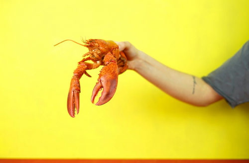5 Reasons to Buy Lobster Online