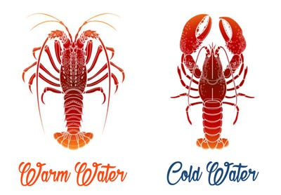 warm water vs cold water lobster