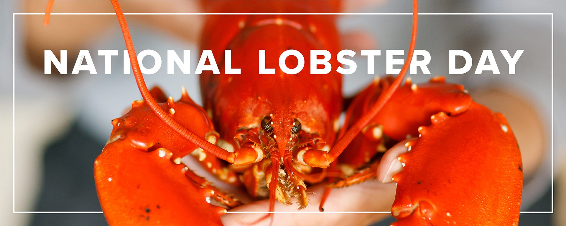 national lobster day landing page feature