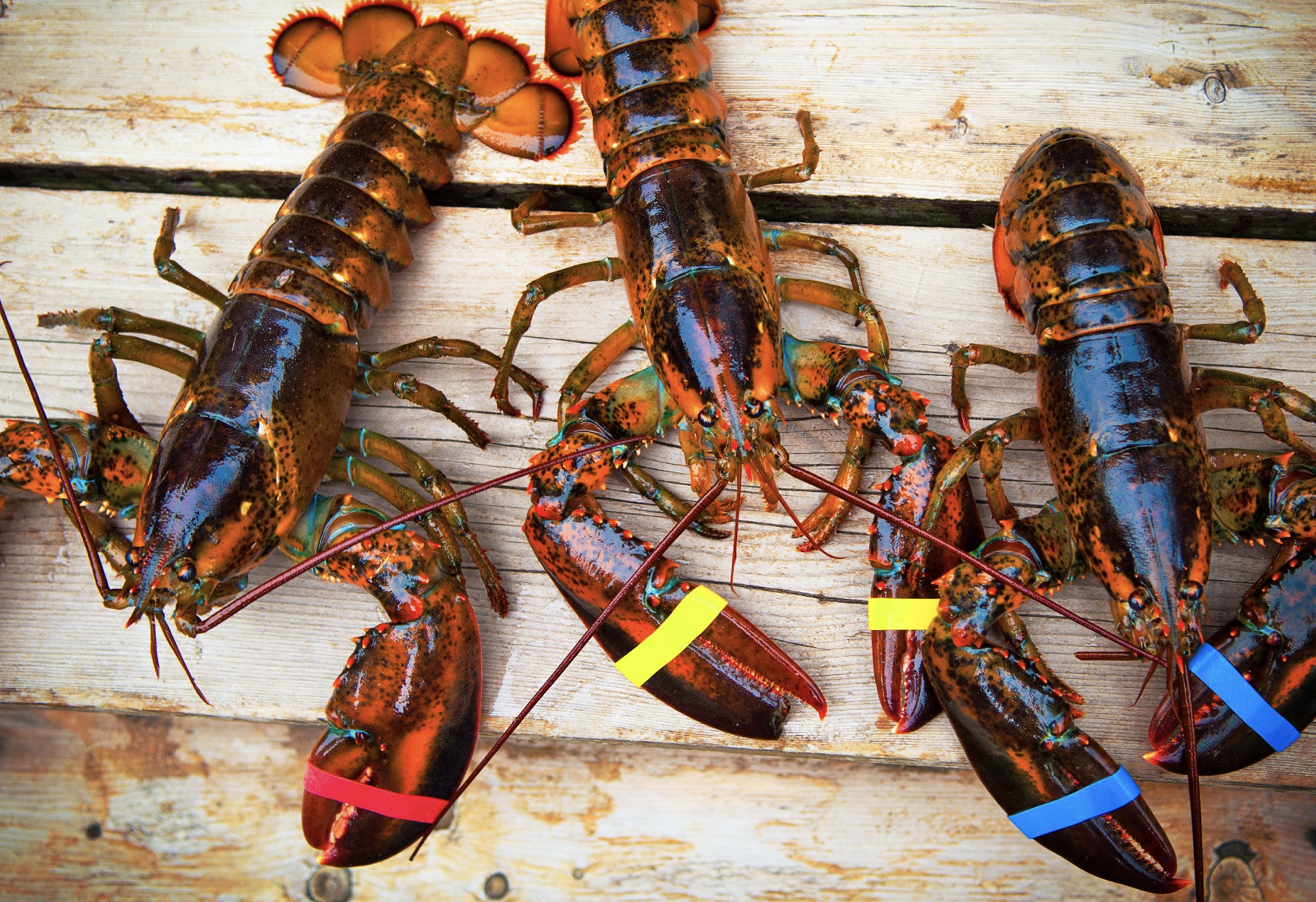 Lobster on a wooden table