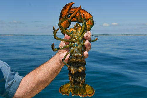 What is responsibly sourced seafood