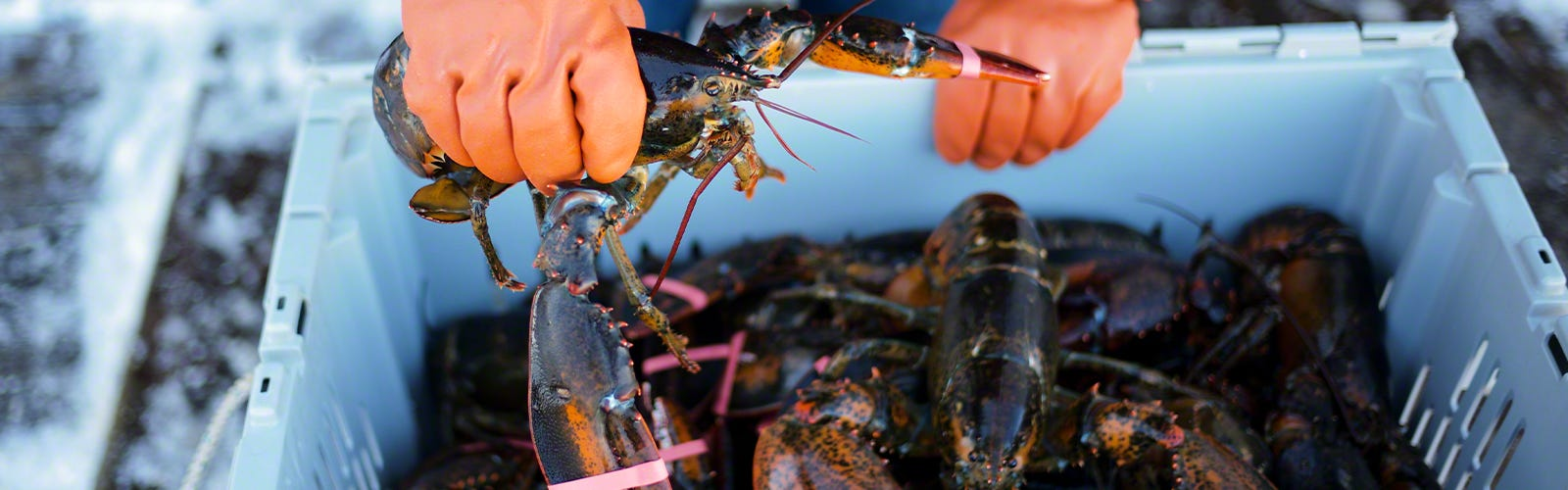 We source our seafood from local fishermen