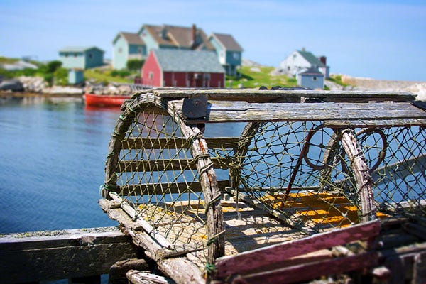 Legal limit of lobster traps