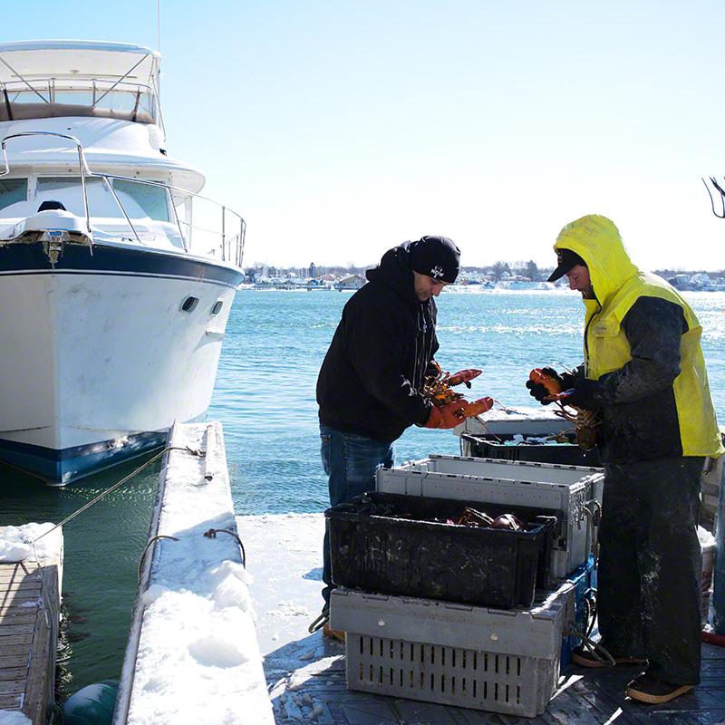 Buy Lobster Direct From Fishermen