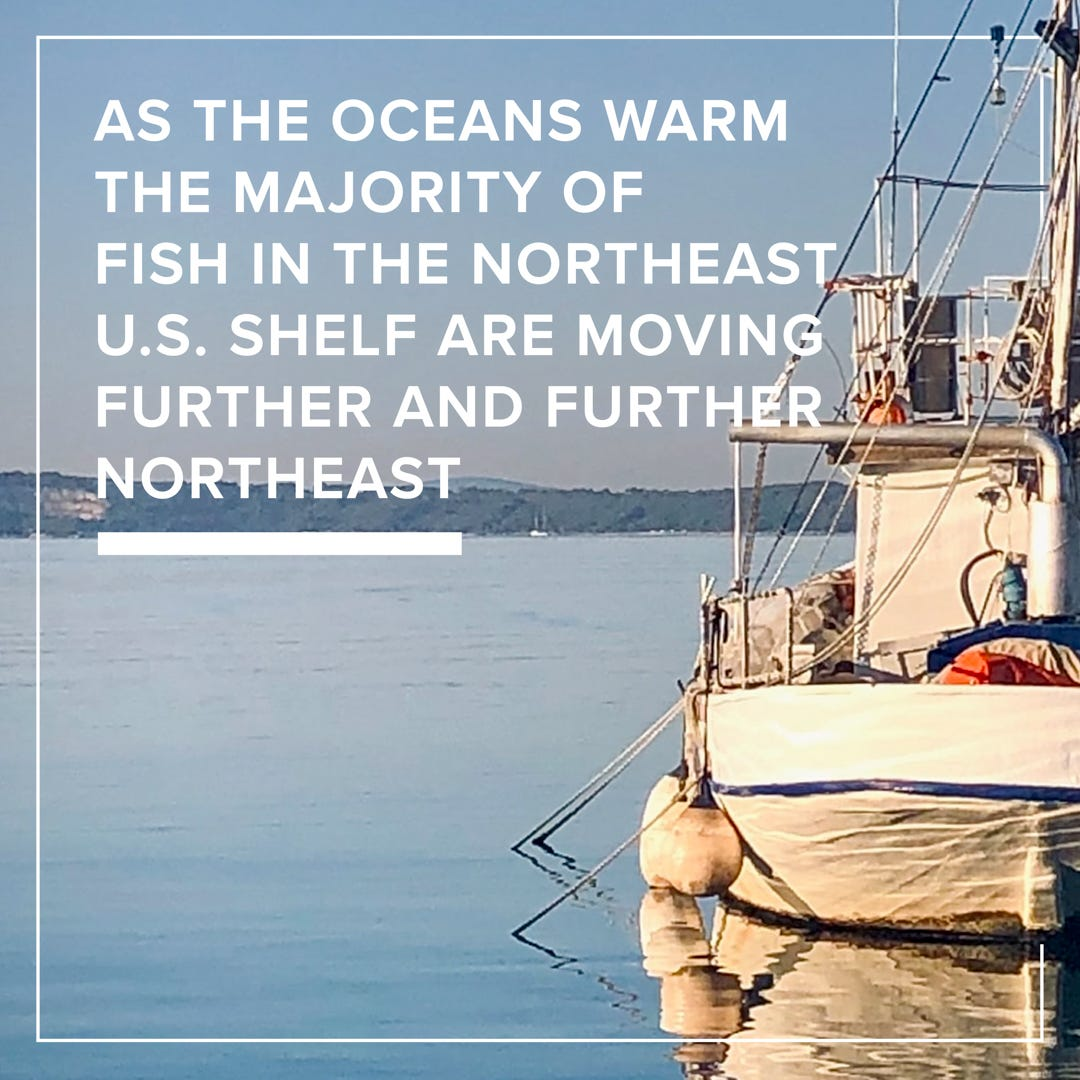 rising ocean temperatures affect lobsters