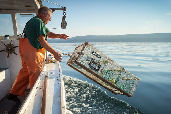 Limited lobstering licenses